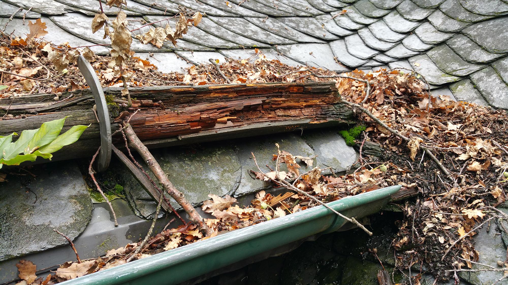 laubfangsysteme gegen herbstlaub dachdeckermeister tim schindler in wermelskirchen. Black Bedroom Furniture Sets. Home Design Ideas